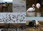 Mid-winter Counts in the Evros Delta