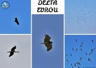 LARGE CONCENTRATIONS OF MIGRATING BIRDS OVER THE EVROS DELTA