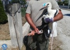 Stork rescue in Feres