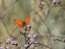 Πεταλούδα / Butterfly (K. Panagiotidis)
