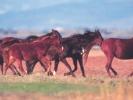 Άλογα / Horses (A. Athanasiadis)