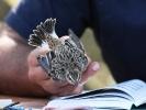 Δακτυλίωση πουλιού, Δέλτα Έβρου 2012 / Ringing bird Evros Delta 2012 (Κ.Παναγιωτίδης)