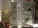 Εκθέματα πουλιών / Βird exhibits (Μ. Angelidis)