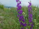 Χλωρίδα | Flora