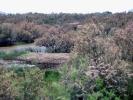 Πλημμυρίζουσα Zώνη / Flooded zone (A. Athanasiadis)