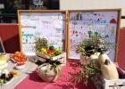 """""""Φεστιβάλ Συγκομιδής"""" του Προγράμματος Σχολικών Κήπων του 2ου Δημοτικού Σχολείου Φερών"""